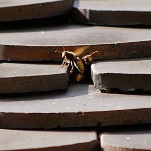 Wespen- und Hornissennester – Gesetzeslage / Rechtliche Hintergründe