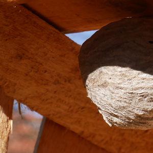 Wir helfen Wespen und Hornissen in Garten und Haus